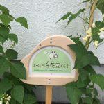 【白花豆の花が咲きました・・・・・・】
