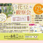 【白花豆の観察会】